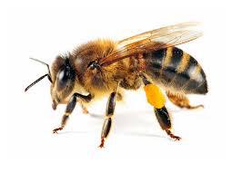 killer-bees-2